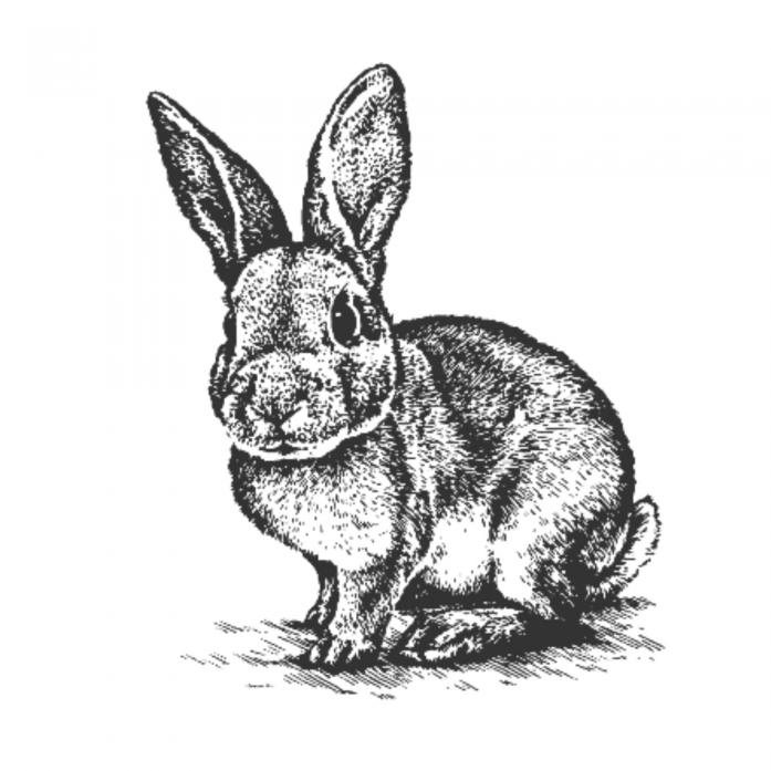 Картинка от руки зайца